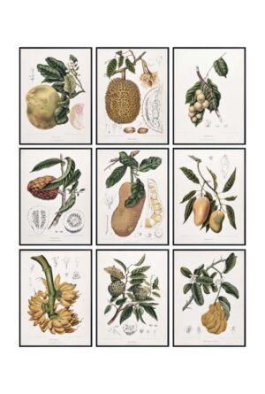 fruit botany art set 9 multi 1.jpg